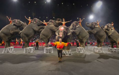 Ringling Brothers Circus takes final bow